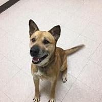 Adopt A Pet :: Tank - Marion, OH