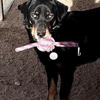 Adopt A Pet :: Lou - Lancaster, CA