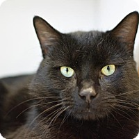 Adopt A Pet :: Zeus - Scituate, MA
