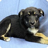 Adopt A Pet :: Van - Westminster, CO