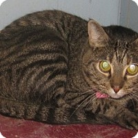 Adopt A Pet :: Felicia - Dallas, TX