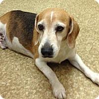 Adopt A Pet :: Bandit - Davie, FL