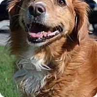 Adopt A Pet :: Lexi - Danbury, CT