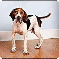Adopt A Pet :: Duke - Owensboro, KY