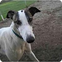 Adopt A Pet :: Gaston (Trip My Switch) - Chagrin Falls, OH
