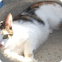 Adopt A Pet :: Bettie-Jo - Colmar, PA