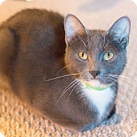 Adopt A Pet :: Britton - Chicago, IL