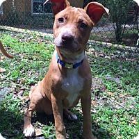 Adopt A Pet :: Peach - Tampa, FL