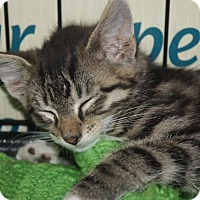 Adopt A Pet :: Tex (LE) - Little Falls, NJ