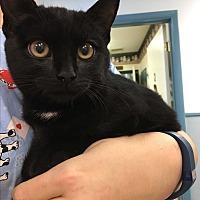 Adopt A Pet :: Anna - Richboro, PA