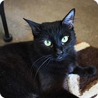 Adopt A Pet :: Jessica - Redwood City, CA