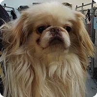 Adopt A Pet :: Casper - Grants Pass, OR