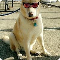 Adopt A Pet :: Zach - Cedar Rapids, IA