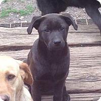 Adopt A Pet :: URSULA - Berwick, ME