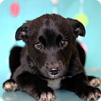 Adopt A Pet :: Grizzly - Waldorf, MD