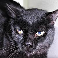 Adopt A Pet :: Big Boy Pampa - Denver, CO