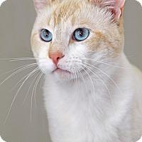 Adopt A Pet :: Sean Little - Encinitas, CA