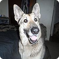 Adopt A Pet :: Britta - Green Cove Springs, FL