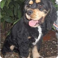 Adopt A Pet :: Dover - Sugarland, TX