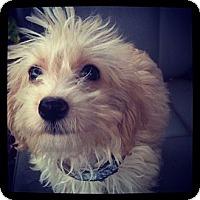 Adopt A Pet :: Ben - Louisville, KY
