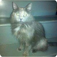 Adopt A Pet :: Sara - Jenkintown, PA