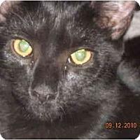 Adopt A Pet :: Panther - Riverside, RI