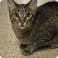 Adopt A Pet :: Bartholomew - Lombard, IL