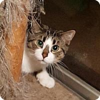 Adopt A Pet :: Walter - Orlando, FL