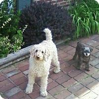 Adopt A Pet :: Cosmo and Bridget - Winchester, VA