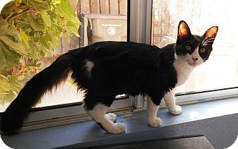 Domestic Mediumhair Kitten for adoption in Riverside, California - Carmen