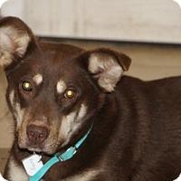 Adopt A Pet :: Kali - Avon, NY