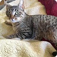 Adopt A Pet :: Victoria - Arlington/Ft Worth, TX