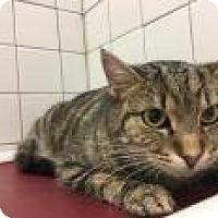 Adopt A Pet :: Weasley 7369 - Columbus, GA