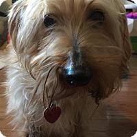 Adopt A Pet :: Thor - Humble, TX