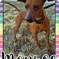 Adopt A Pet :: Monroe - Edwards AFB, CA