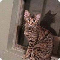 Adopt A Pet :: PIPPA - Mesa, AZ