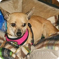 Adopt A Pet :: Daisy May - Beavercreek, OH