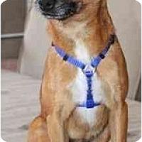 Adopt A Pet :: Dansin - Gilbert, AZ