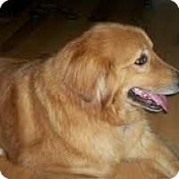 Adopt A Pet :: Andre - Foster, RI