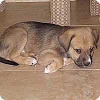 Adopt A Pet :: Astro - Phoenix, AZ