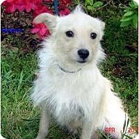 Adopt A Pet :: Bubbles - Franklinton, NC