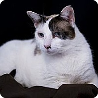 Adopt A Pet :: Patches - El Cajon, CA