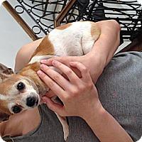Adopt A Pet :: Jelly Bean - Los Angeles, CA