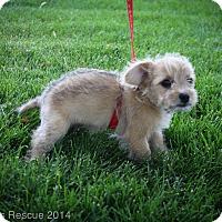 Adopt A Pet :: MERIDA - Broomfield, CO
