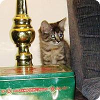 Adopt A Pet :: Arielle - Kirkwood, DE