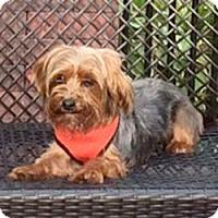 Adopt A Pet :: Lulu - Canton, IL