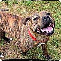 Adopt A Pet :: Cricket - Bastrop, TX