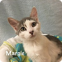 Adopt A Pet :: Margie - Foothill Ranch, CA