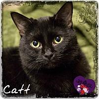 Adopt A Pet :: Catt - Germantown, OH