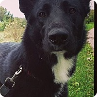 Adopt A Pet :: Flynn - Cambridge, ON